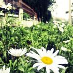 Hoa bên đường